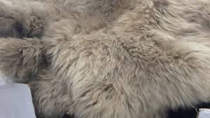 captivating sheepskin rug costco in rugs carpet top your residence inspiration