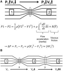 simplified bernoulli equation. download figure simplified bernoulli equation i