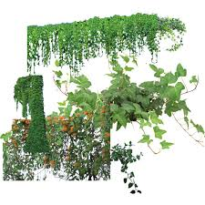 Small Picture Garden Design Garden Design with Designer Vines psd material with