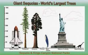 Tree Root Size Chart Chart To Compare The Size Of Sequoias Trees And Other Stuff