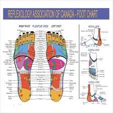 Reflexology Chart Templates 9 Free Pdf Documents Download
