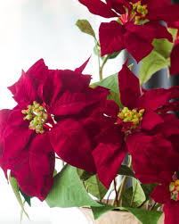 Red Poinsettia Stems, Set of 4 by Balsam Hill