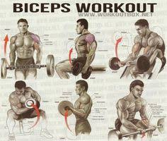 Biceps Workout Healthy Fitness Workout Sixpack Back Calves