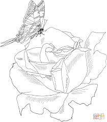 Small Picture Roses coloring pages Free Coloring Pages