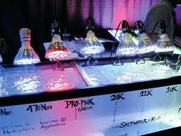 reef tank led lighting guide r marine here creative ways light prized specimens
