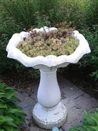 upcycled old cement painted bird bath turned into a planter for baby hens