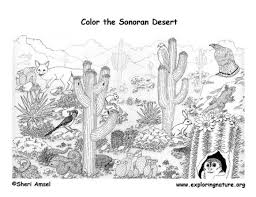 Small Picture Desert Coloring Pages Arizona Desert Animals Coloring Pages