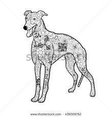 Small Picture Greyhounds Stock Photos Royalty Free Images Vectors Shutterstock