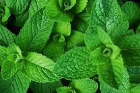 plantas medicinales5