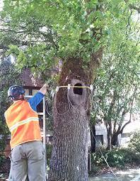 Tree Risk Assessment New Day Arborist