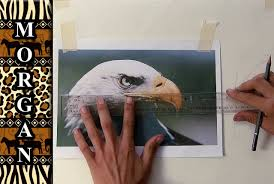 how to transfer a drawing photo to canvas for painting jason morgan wildlife art you
