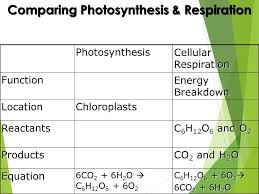 compare the chemical equations for cell respiration and
