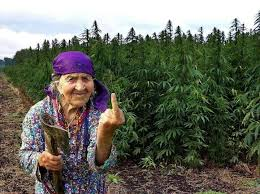 Image result for marijuana man and woman