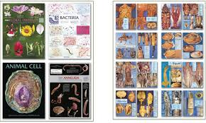 Biology Charts And Posters Biology Wall Charts Dissection Charts By Biocam