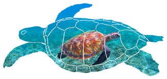 cruising sea turtle wall art beach