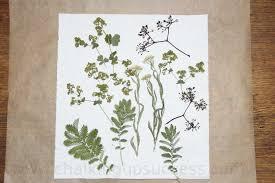 Flower Pressed Paper How To Make Beautiful Pressed Flower Lanterns Easy Diy