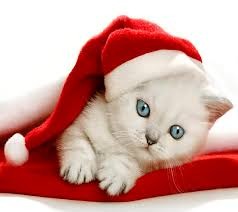 Christmas Kitten High Definition Wallpaper 18701 - Baltana