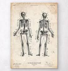 Human Bone Chart Human Skeleton Chart