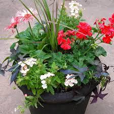 Flower Garden Ideas For Full Sun Best On Pinterest And Design Container Garden Ideas Full Sun