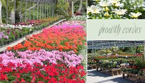 from little plugs of soil and seedlings we grow beautiful varieties in our own greenhouses using the finest custom mixed potting soils and fertilizers