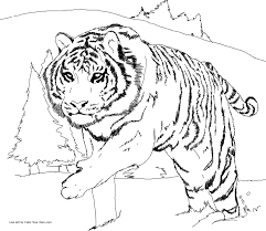 Small Picture Siberian Tiger coloring page Homeschool Learning Ideas