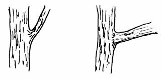 Small Picture Tree Branch Coloring Page Best Coloring Page 2017