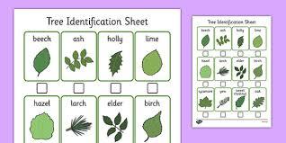 Tree Identification Sheet Tree Identification Sheet