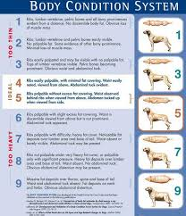Diet Chart Of A Dog