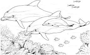 Small Picture Dolphin Coloring Pages chuckbuttcom