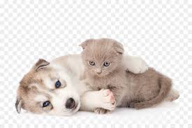 kittens and puppies hugging.  And Siberian Husky Kitten Cat Puppy  Hug Kitten For Kittens And Puppies Hugging D