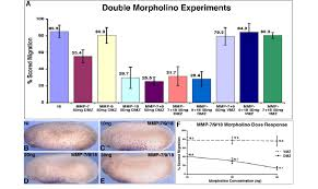 Mt2 Dosage Chart Multiple Loss Of Function Experiments Demonstrate That The