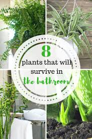 Best 25+ Bathroom plants ideas on Pinterest | Best bathroom plants, Plants  in bathroom and Plants for bathroom