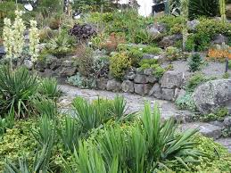 succulent rock garden by sk8ell succulent rock garden by sk8ell