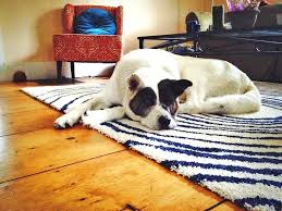 mohawk pet friendly area rugs fabulous best for dogs shocking on
