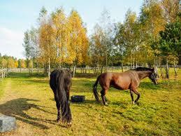 stajnia isengard zar oacute wno dla konia jak i je d ca