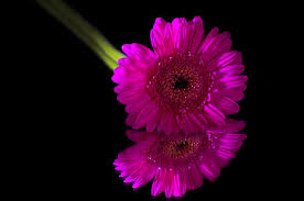 black colour background with flower