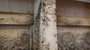 Mold in Air Ducts Can Cause Allergic Reactions   Angie's List