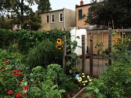 capitol hill has more colorful community gardens than any other neighborhood in the city three gardens are part of the dc department of parks and