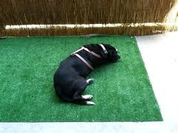 diy dog potty area dog potty area for patio dog potty area for patio home design