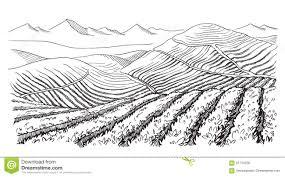 coffee plantation illustration. Brilliant Coffee Download Coffee Plantation Landscape Stock Vector  Illustration Of Grow  Food 91714356 To F