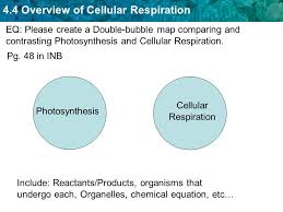 eq please create a double bubble map comparing and contrasting photosynthesis and cellular respiration