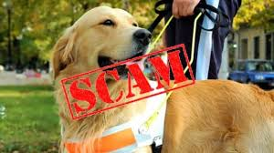 Emotional support animal real Airlines Us Service Animals Are You Falling For An Emotional Support Animal Scam Us Service Animals Us Service Animals Are You Falling For An Emotional Support Animal