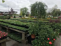 getting its start as a small scale landscape installation company begick nursery and garden center has evolved into a full service retailer offering