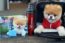 Boo the Pomeranian, named the