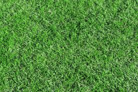 grass field from above. Modren Above Beautiful Green Grass  Horizontal Field Shot From Above Stock Photo  14976741 On Grass Field From Above E