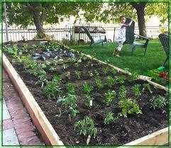 vegetable garden advice for making