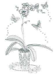 Orchid Coloring Pages Dpalaw