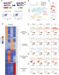 Identification Of Functionally Distinct Fibro Inflammatory