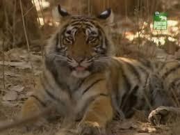 Реферат на тему животный мир африки roepobe s diary Реферат на тему Животный мир Африки скачать похожие животный мир реферат на тему животный мир на