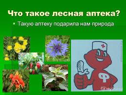 Презентация на тему Лесная аптека Урок по окружающему миру  2 Что такое лесная аптека Такую аптеку подарила нам природа Такую аптеку подарила нам природа